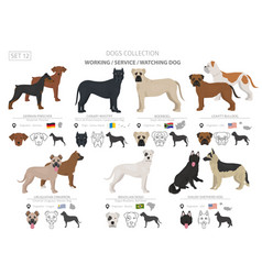 working service and watching dogs collection vector image
