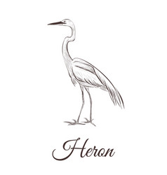 heron is a sketch drawing vector image