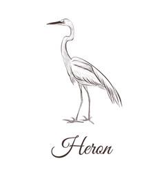 Heron is a sketch drawing vector