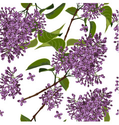seamless pattern with spring lilac flowers vector image