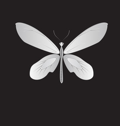 metal butterfly vector image