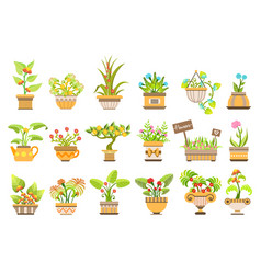 Flowers in pots set vector