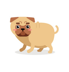 funny cartoon pug dog character vector image