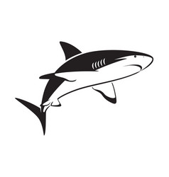 graphic shark on white background vector image