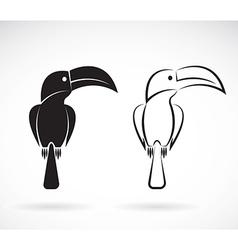 Image an toucan bird design vector