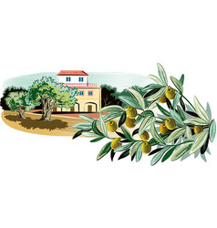 Olives on a branch and a mediterranean farmhouse vector