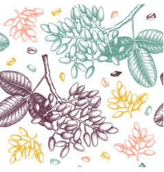 pistachio seamless pattern hand drawn culinary vector image