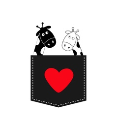 Cute cartoon black white giraffe in the pocket Boy vector image