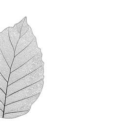 botanical series elegant single detailed partial vector image vector image