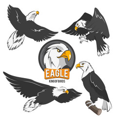 Set of cartoon eagles in different action poses vector