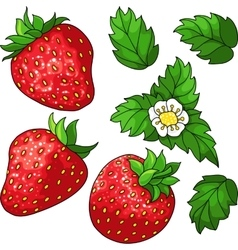 Set ripe juicy strawberries vector