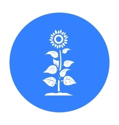Sunflower icon black Single plant icon from the vector image