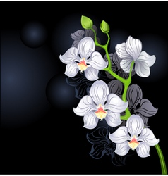 white orchids vector image