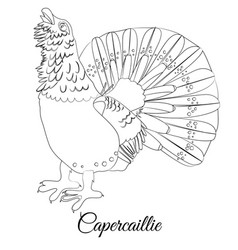 Capercaillie bird type coloring outline vector