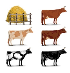 Cow Icons vector