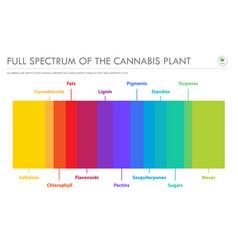 Full spectrum cannabis plant horizontal vector