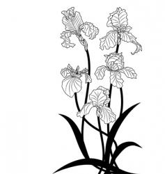 Irises vector