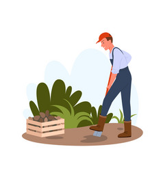 people dig potatoes in garden or field holding vector image