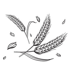 A few ears of wheat on beige background hand vector