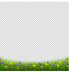 crocus flowers border with grass transparent vector image