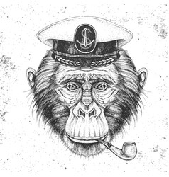 Hipster animal monkey in captains cap vector