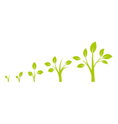 infographic planting tree vector image