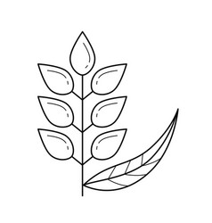 Wheat ears line icon vector