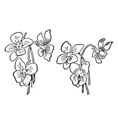 Three violets vintage vector