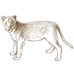 Engraving antique lion cub vector