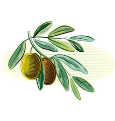 Olives on a small olive branch vector