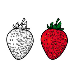 strawberry in line style design element for logo vector image