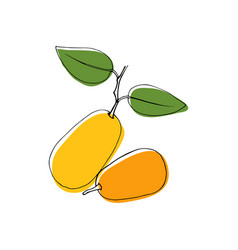 Vintage style hand drawn kumquat fruits vector