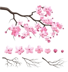 Japan sakura cherry branch with blooming flowers vector image vector image