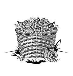 retro basket grapes black and white vector image