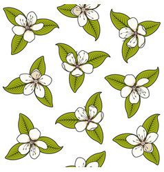 seamless pattern with white spring flowers vector image
