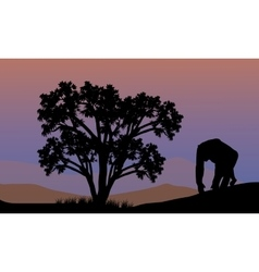 Silhouette of gorilla walking vector image