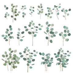 silver dollar eucalyptus elements isolated on vector image