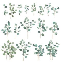 Silver dollar eucalyptus elements isolated vector