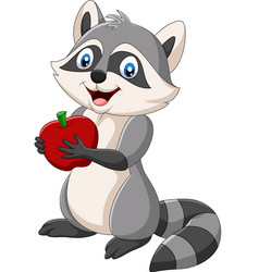 cartoon raccoon holding a red apple vector image