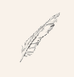 hand drawn feather isolated element vector image