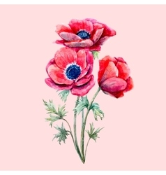 Watercolor red anemone flower vector image