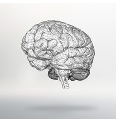human brain The structural vector image