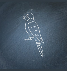 Rosella parrot icon sketch on chalkboard vector