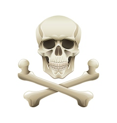 skull crossbones isolated vector image