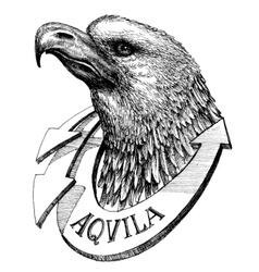 Eagle head sketch vector