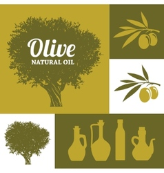 Olive tree vector image vector image