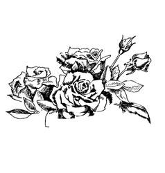 vintage roses ink hand drawn vector image