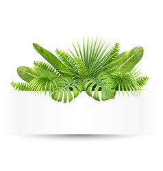 banner with tropical leaves vector image