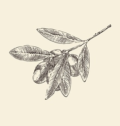 Olive branch olive tree branches vintage vector