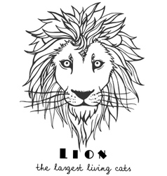 Black and white decorative hand drawn lion vector image vector image